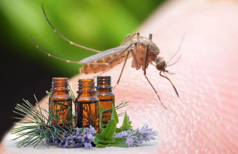 Best Essential Oils for Mosquito Bites